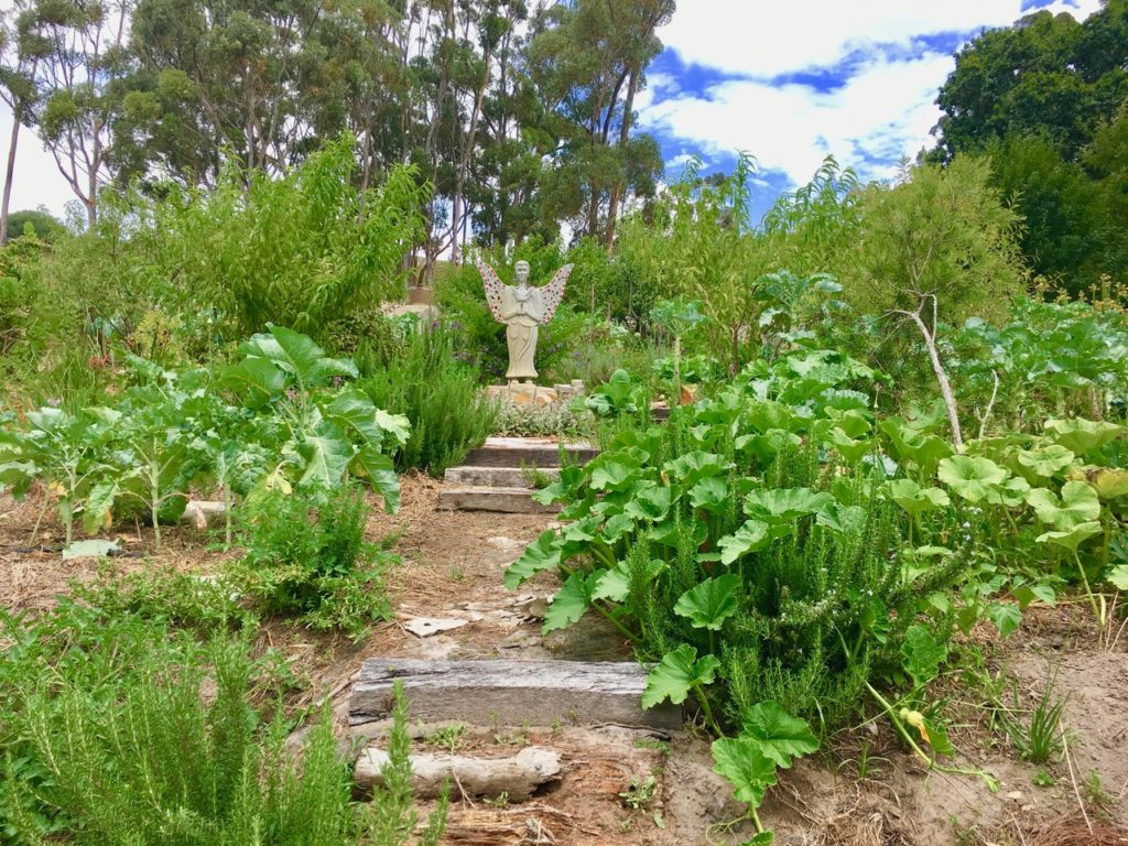 Nancy Addison Discusses Sustainable Organic Gardening And How It Is Done By A Lady